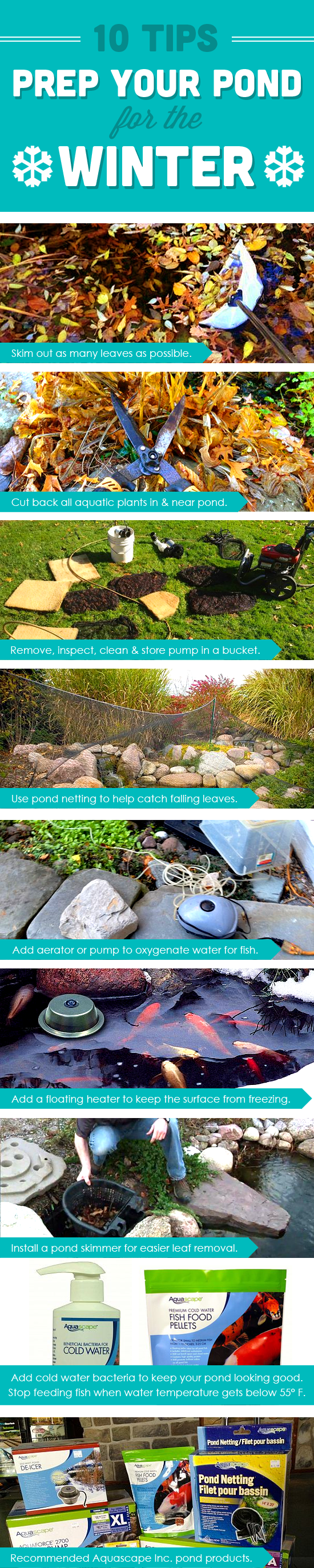 10 tips for preparing your pond for the winter koi gardens and