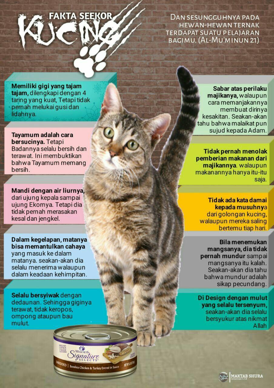 Kucing Dalam Al Quran : kucing, dalam, quran, Fakta, Seekor, Kucing, Kucing,, Hewan,