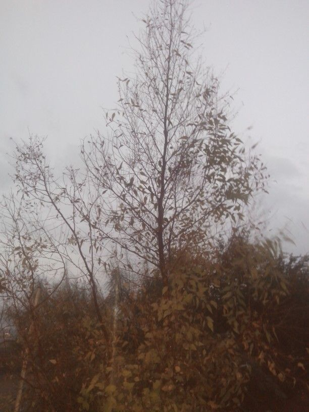 Dia de lluvia en Juarez Mexico