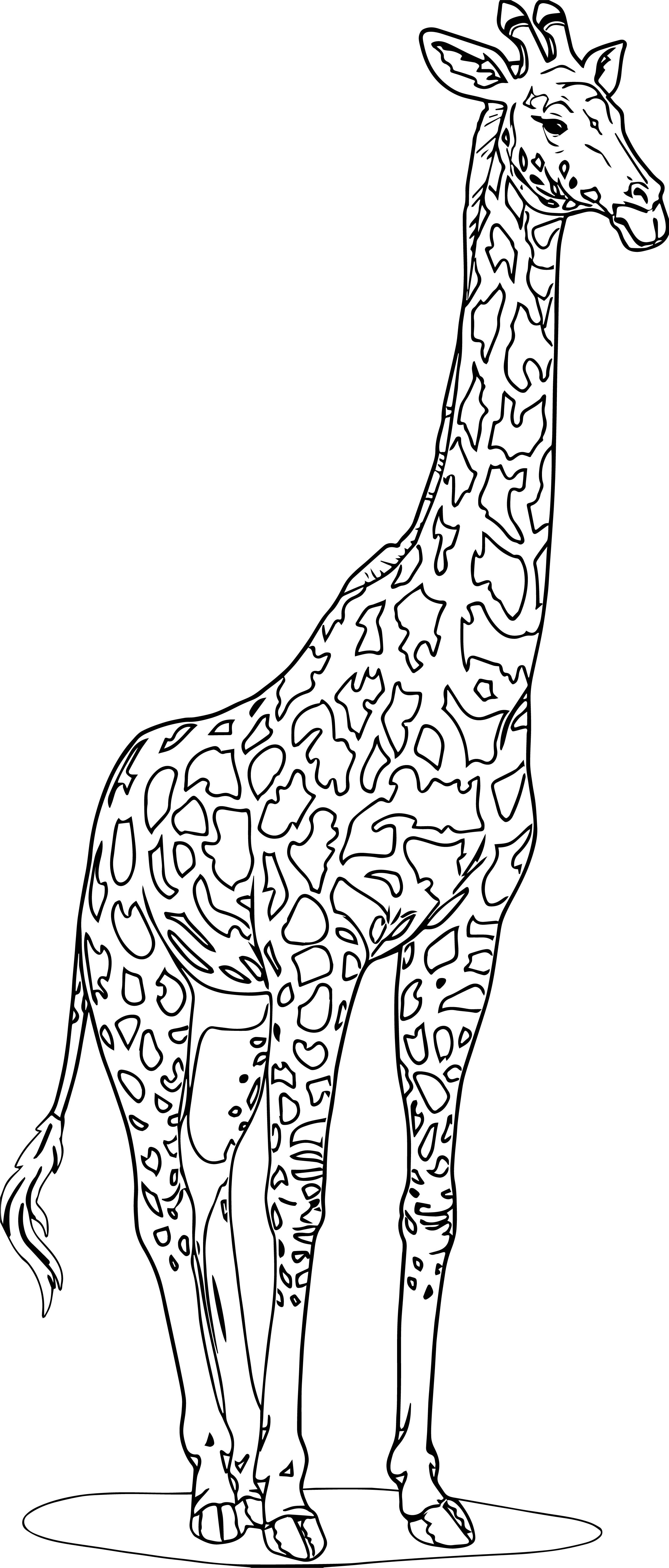 Nice Realistic Beautiful Giraffe Coloring Page Animal Coloring Pages Giraffe Coloring Pages Horse Coloring Pages