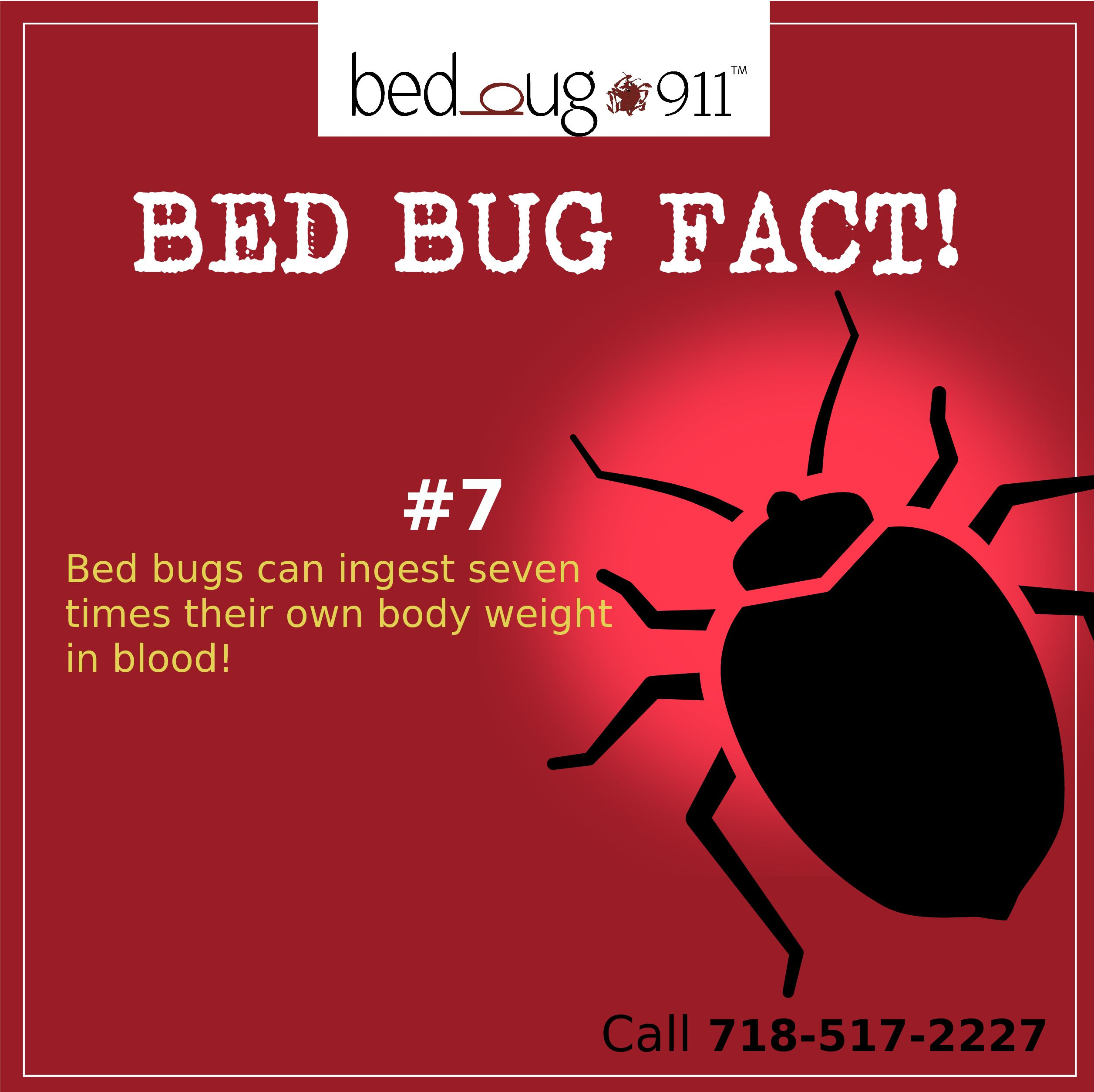 Do bed bugs travel on people's clothes? Lear more on Bed