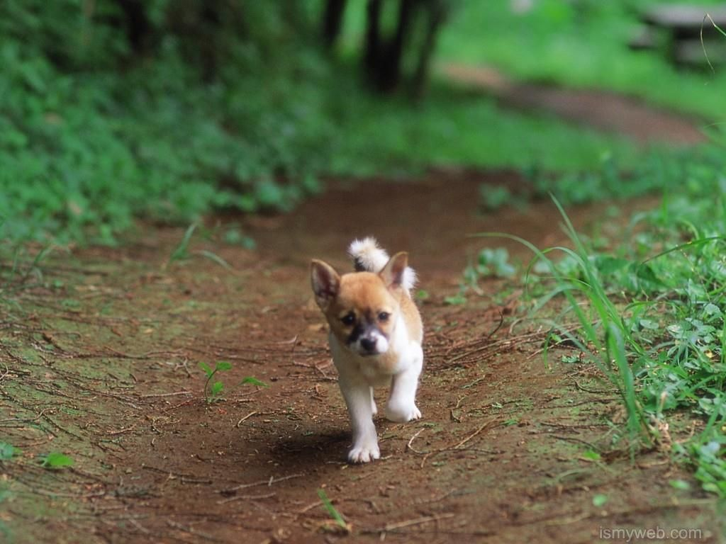 Cute Dogs Hd Wallpaper Download 2 Wallpaper Dogs Dog Pictures