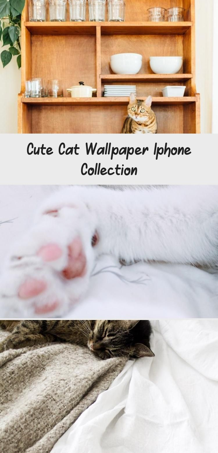 Photo of Cute Cat Wallpaper Iphone Collection – GATOS – Cute Cat Wallpaper iPhone – Bea …
