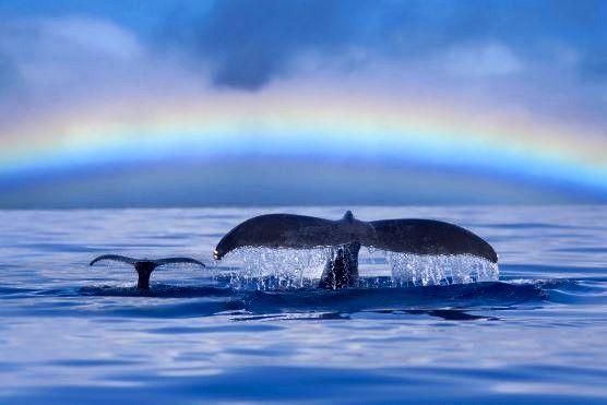 Baleia com filhote ... Love <3