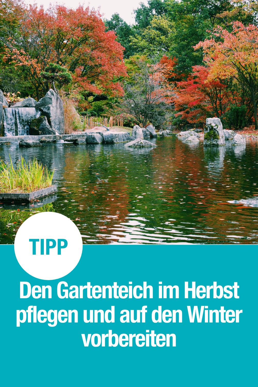 So pflegt ihr euren Gartenteich und Wassergarten im Herbst und bereitet ihn richtig auf den Winter vor.
