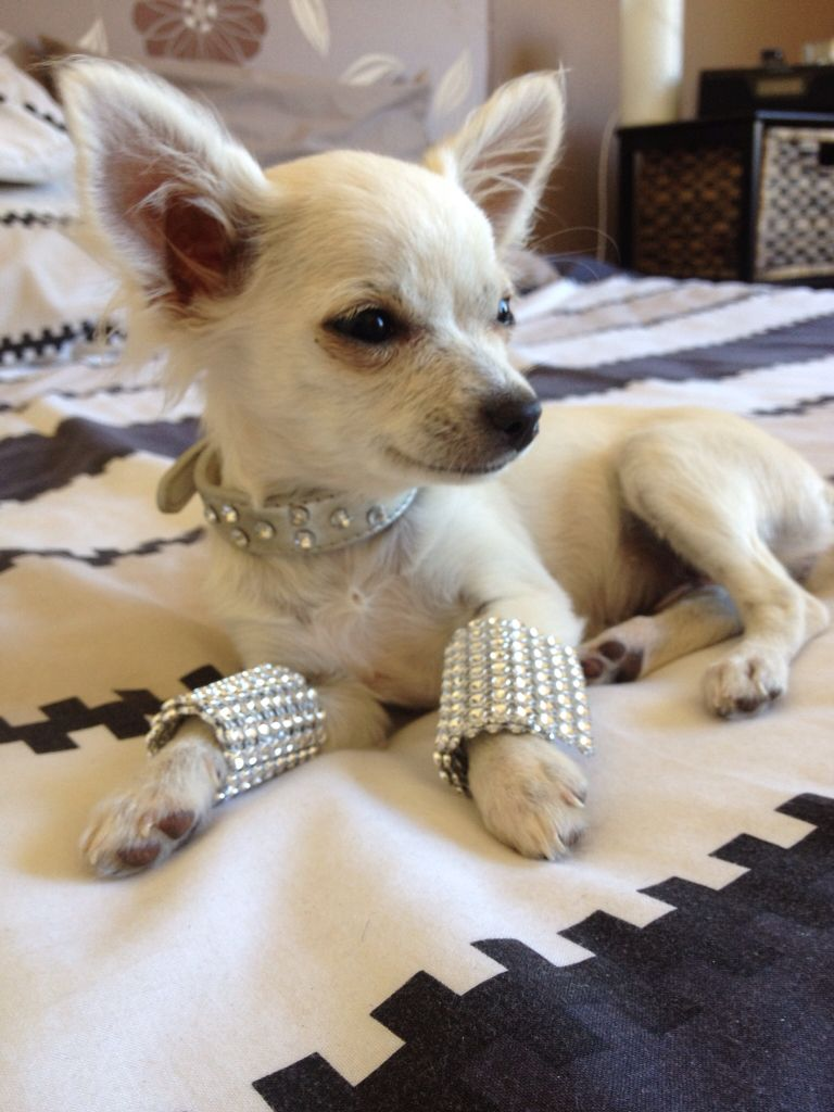 Posh Yuppypup Co Uk Provides The Fashion Conscious With