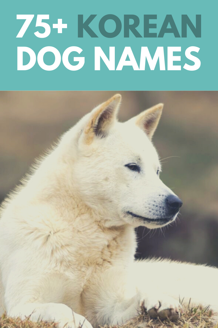48 Best Dog Names From Movies Tv Famous Male Female Dogs Dog Names Best Dog Names Female Dog Names List