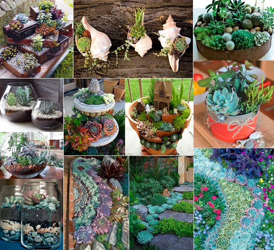 Cactus terrarios suculentas deco jard n pinterest for Decoracion para terrarios