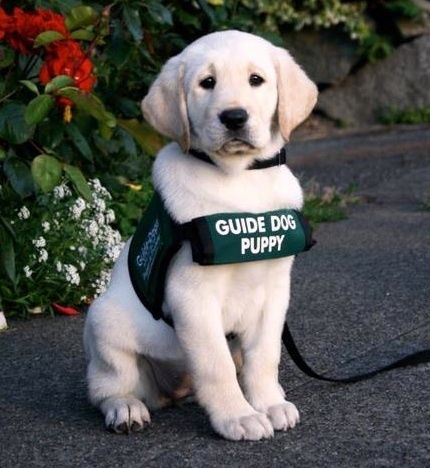 How To Train Your Dog Top Training Tips Dogs Guide Dog Puppies