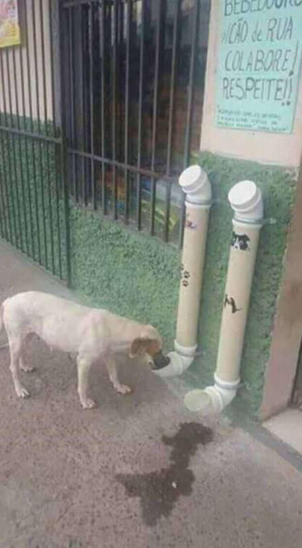 9d07f33a6f95 Genial idea para hacer un comedero automático para perros   PERRIJOS ...