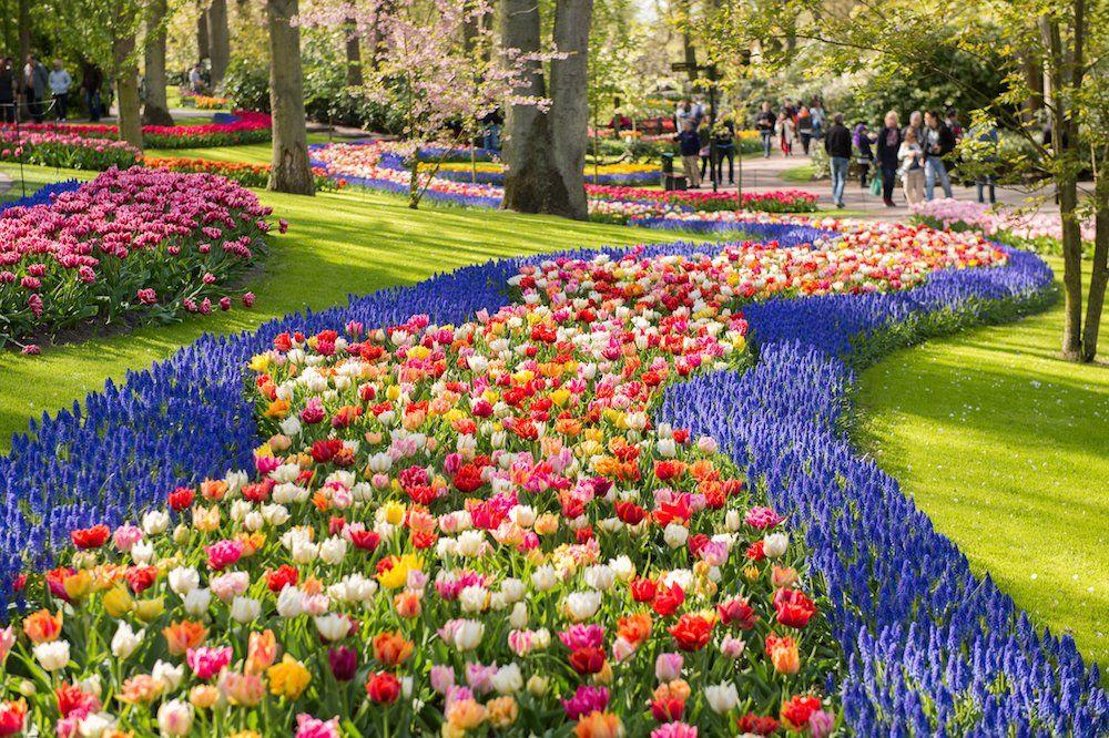 Rosa Carbo Mascarell On Twitter Tulpen Garten Botanischer Garten Blumen Anbauen