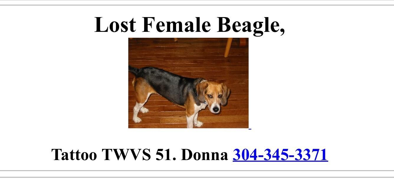 Lost And Found Beagles Page Liked January 29 Missing Female