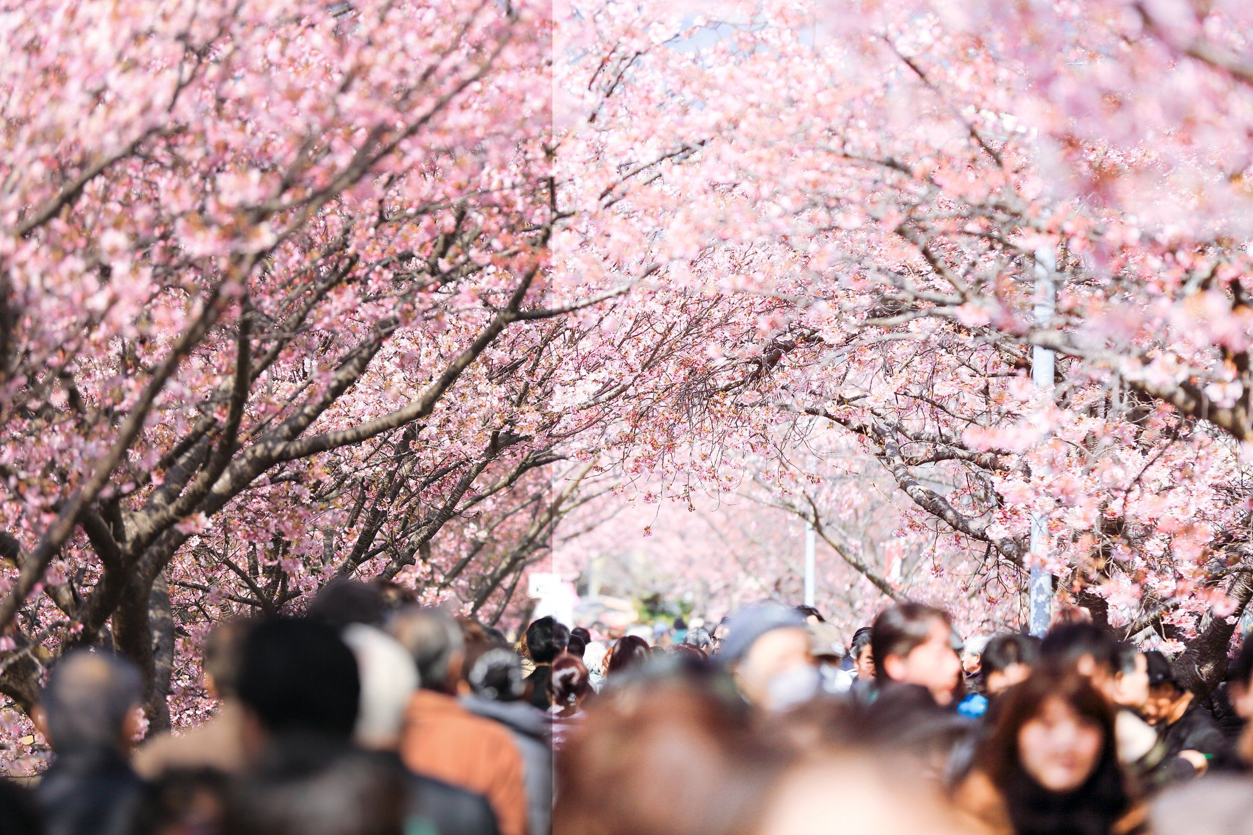 S Series Vscocam Presets Acr Actions Cherry Blossom Symbolism Cherry Blossom Spring Pictures