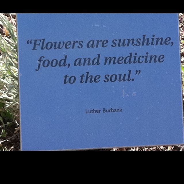 Cool Quote About Flowers   Found At Desert Botanical Gardens.