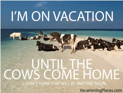 On vacation until the cows come home