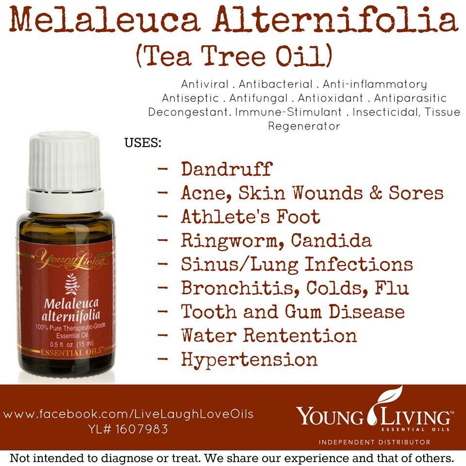 Young Living essential oils - Melaleuca Alternifolia (Tea Tree Oil ...