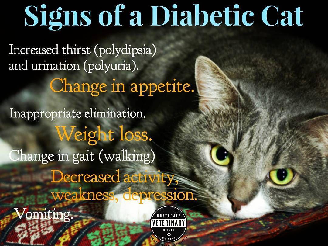 Animal Jobs Near Me Diabetes Support Diabetes Diabetes In Children