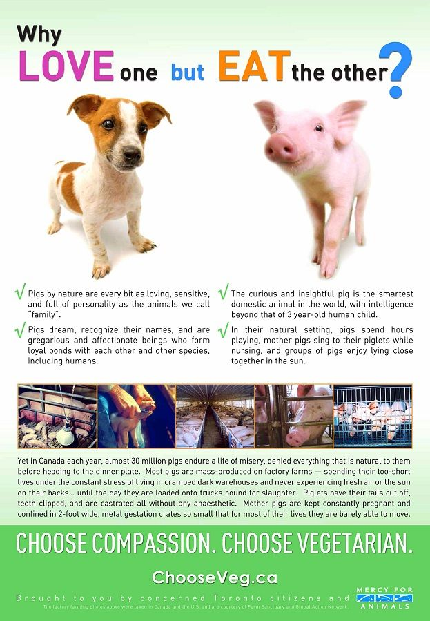 Mini Pigs� and Dogs.  What Could Be Cuter