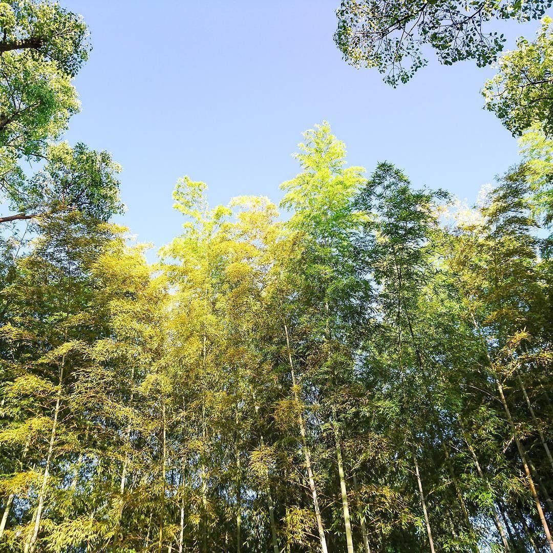 walk_around 25-Aug-2016  #morning  #green #bamboo walk_around 25-Aug-2016  #morning  #green #bamboo
