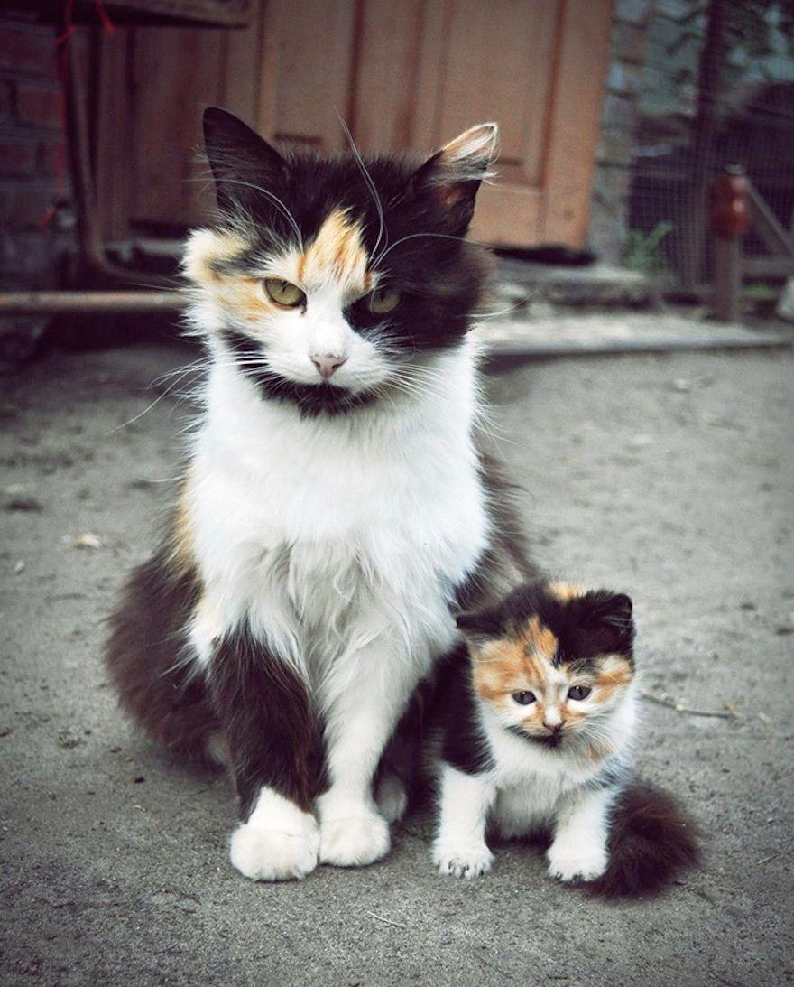 Instagram Tierweltliebe Katzen Freunde Katzen Fotos Baby Katzen Katzen