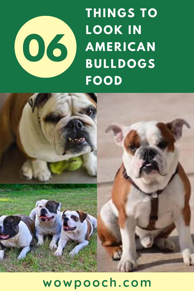 6 Things To Look In American Bulldog S Foods In 2020 American Bulldog Best Dog Food American Bulldog Puppies