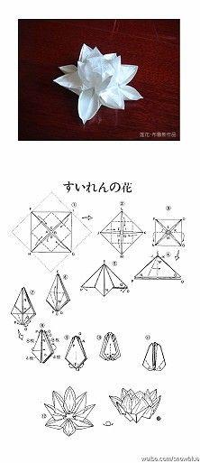 Origami lotus flower make pinterest lotus flower origami and origami lotus flower mightylinksfo