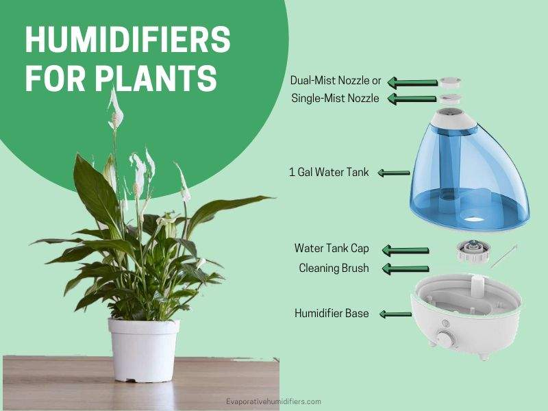Snake Humidifier Best Snake Enclosure Humidifiers On The