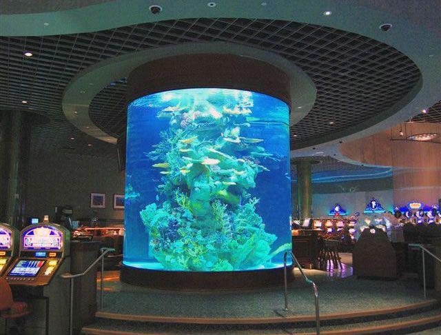 Aquarium Company That Designs Service Supplies Aquariums And