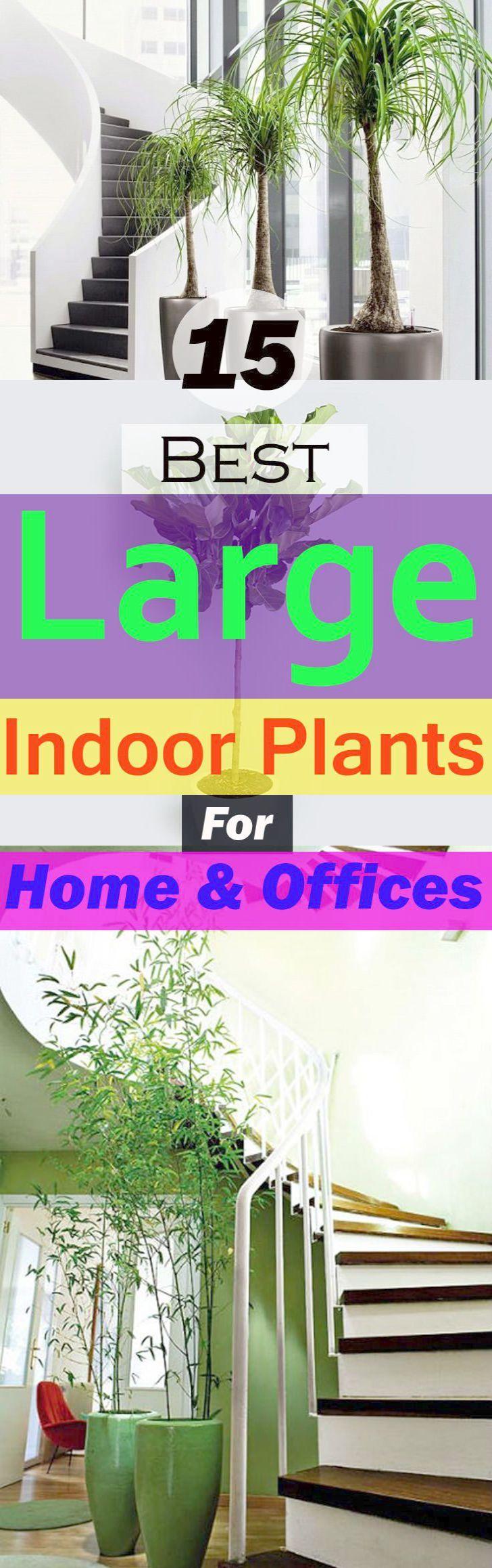Gardening Classes Near Me; Kitchen Gardening For Beginners ...