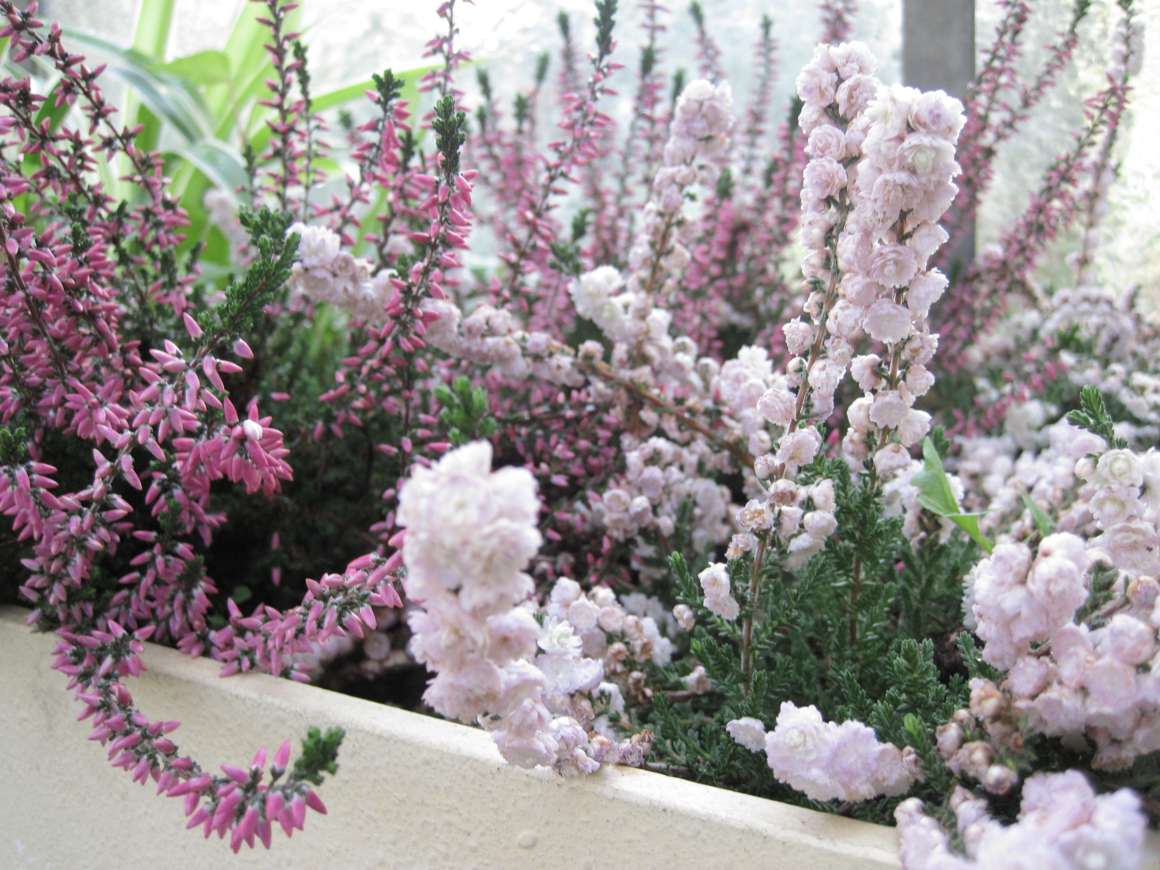 Vintage Flowers from Palmen Garten Frankfurt