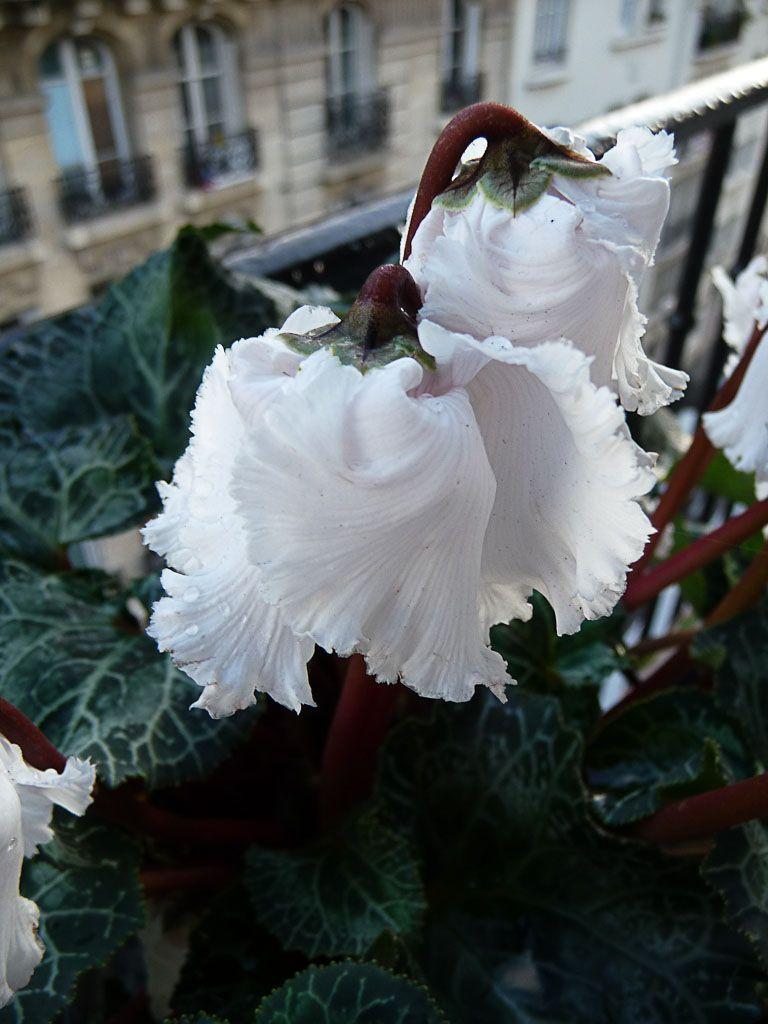 Balcon hiver   Balcon hiver, Balcon, Belles fleurs