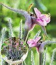 poollicht winterharde plant mooie bijzondere bloemen #kletterpflanzenwinterhart poollicht winterharde plant mooie bijzondere bloemen #kletterpflanzenwinterhart poollicht winterharde plant mooie bijzondere bloemen #kletterpflanzenwinterhart poollicht winterharde plant mooie bijzondere bloemen #kletterpflanzenwinterhart poollicht winterharde plant mooie bijzondere bloemen #kletterpflanzenwinterhart poollicht winterharde plant mooie bijzondere bloemen #kletterpflanzenwinterhart poollicht winterhard #kletterpflanzenwinterhart