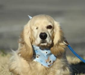 Adopt Shane On Petfinder Dog Sounds Dog Adoption Cute Animals