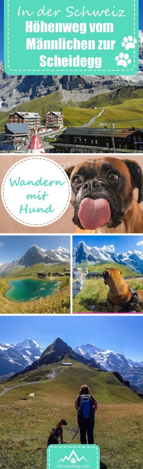 Wanderung Mit Dem Hund In Der Schweiz Uber Hohenweg Vom Mannlichen