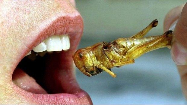 5 platillos con insectos que debes probar al menos una vez en tu vida