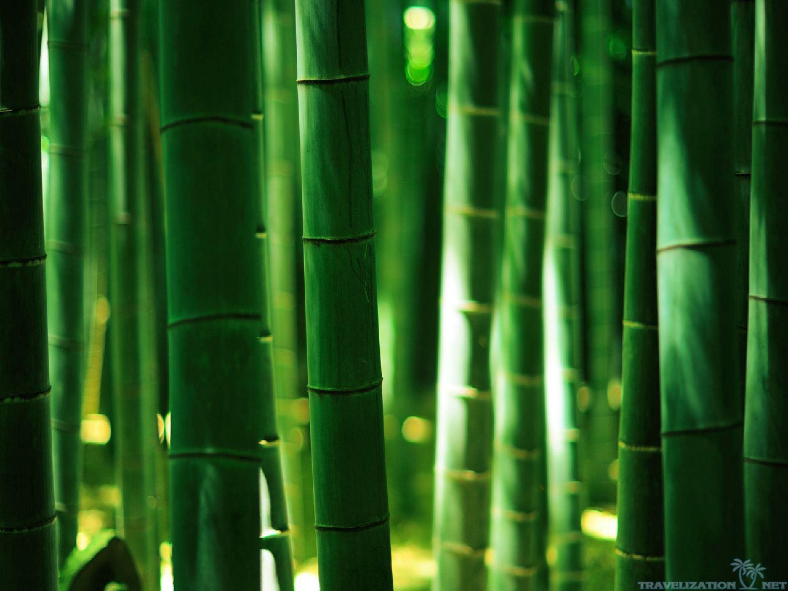 Green Bamboo Forest Hd Desktop Wallpaper Instagram Photo