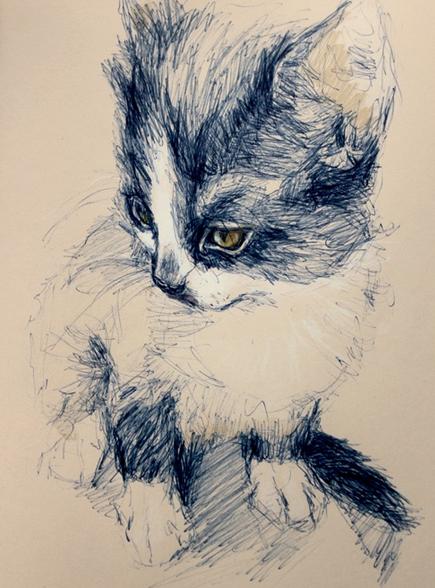 Cat drawing by Spanish illustrator Elisa Ancori