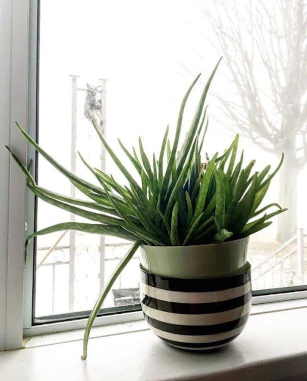 9 plantes qui r sisteront m me aux pires des jardiniers. Black Bedroom Furniture Sets. Home Design Ideas