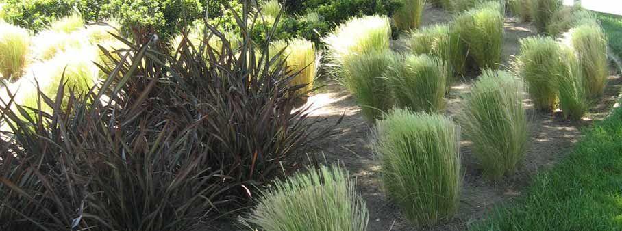 Modern landscape plantings in midwest google search - Grey gardens dive per sempre ...