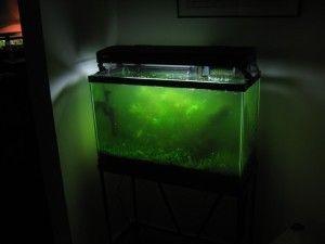 How to Clean an Aquarium