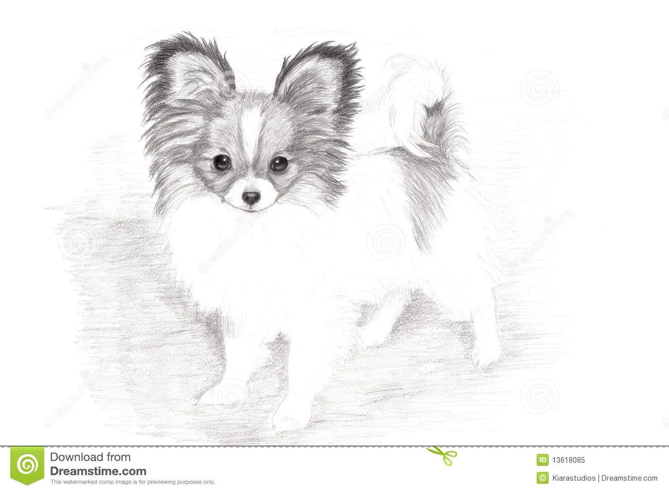 Illustration About A Hand Drawn Picture Of A Darling Papillon Puppy Illustration Of Grey Purebred Drawing Papillon Dog Puppy Coloring Pages Papillon Puppy [ 957 x 1300 Pixel ]