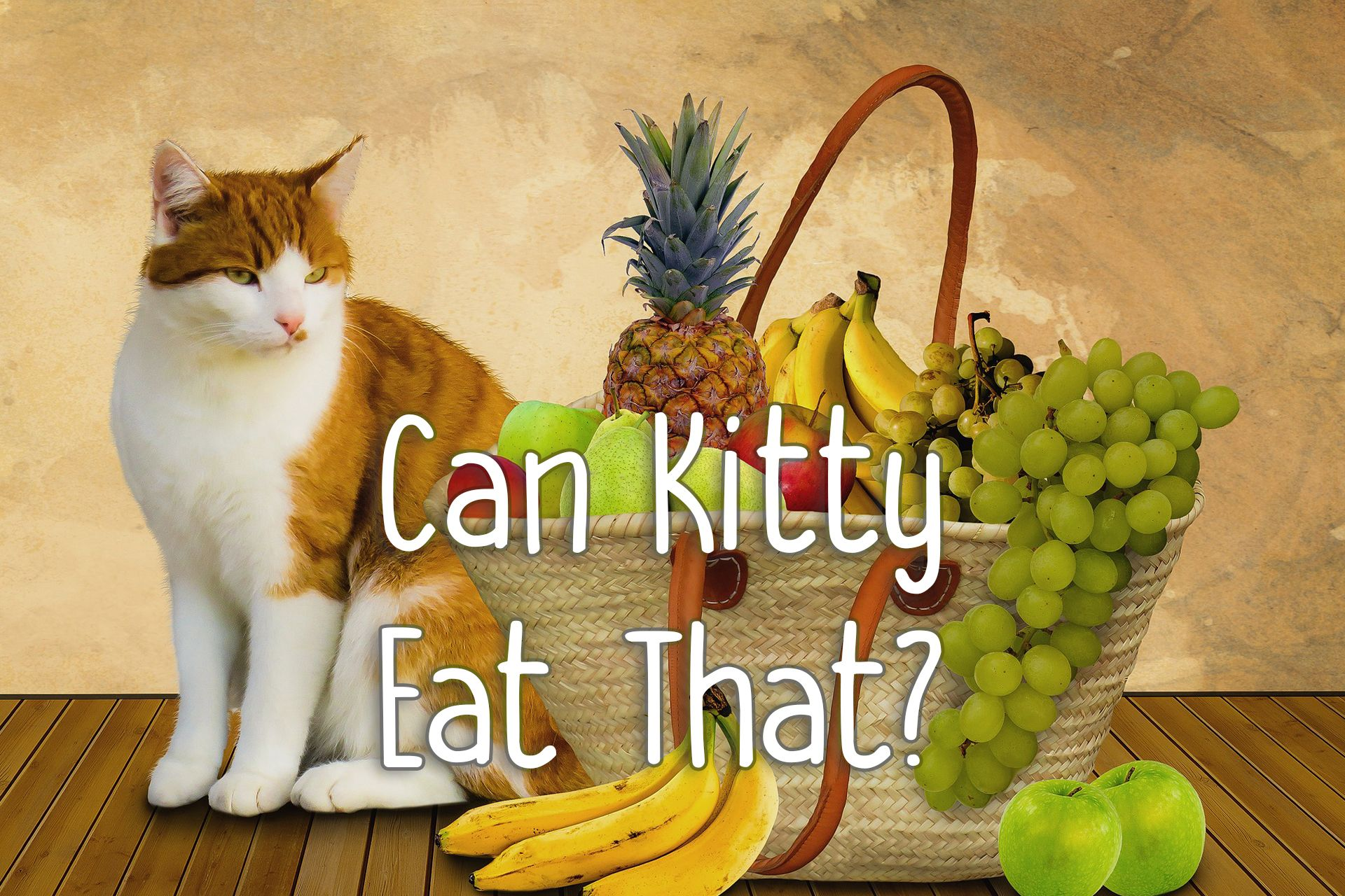 Pin by FelineLiving Cat Care & Heal on Can Cats Eat