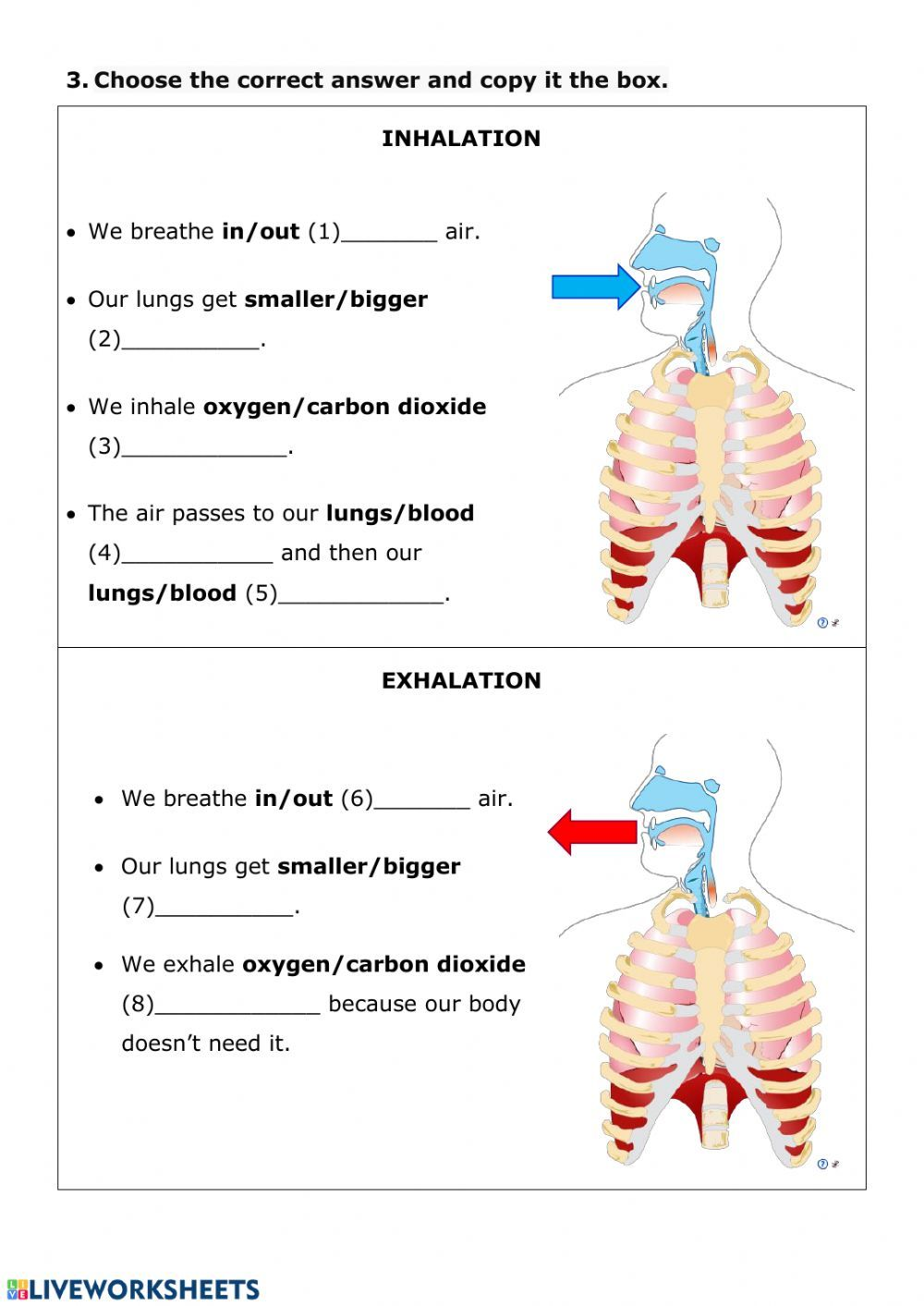 small resolution of NUTRITION 3 - Respiratory System - Interactive worksheet   Respiratory  system