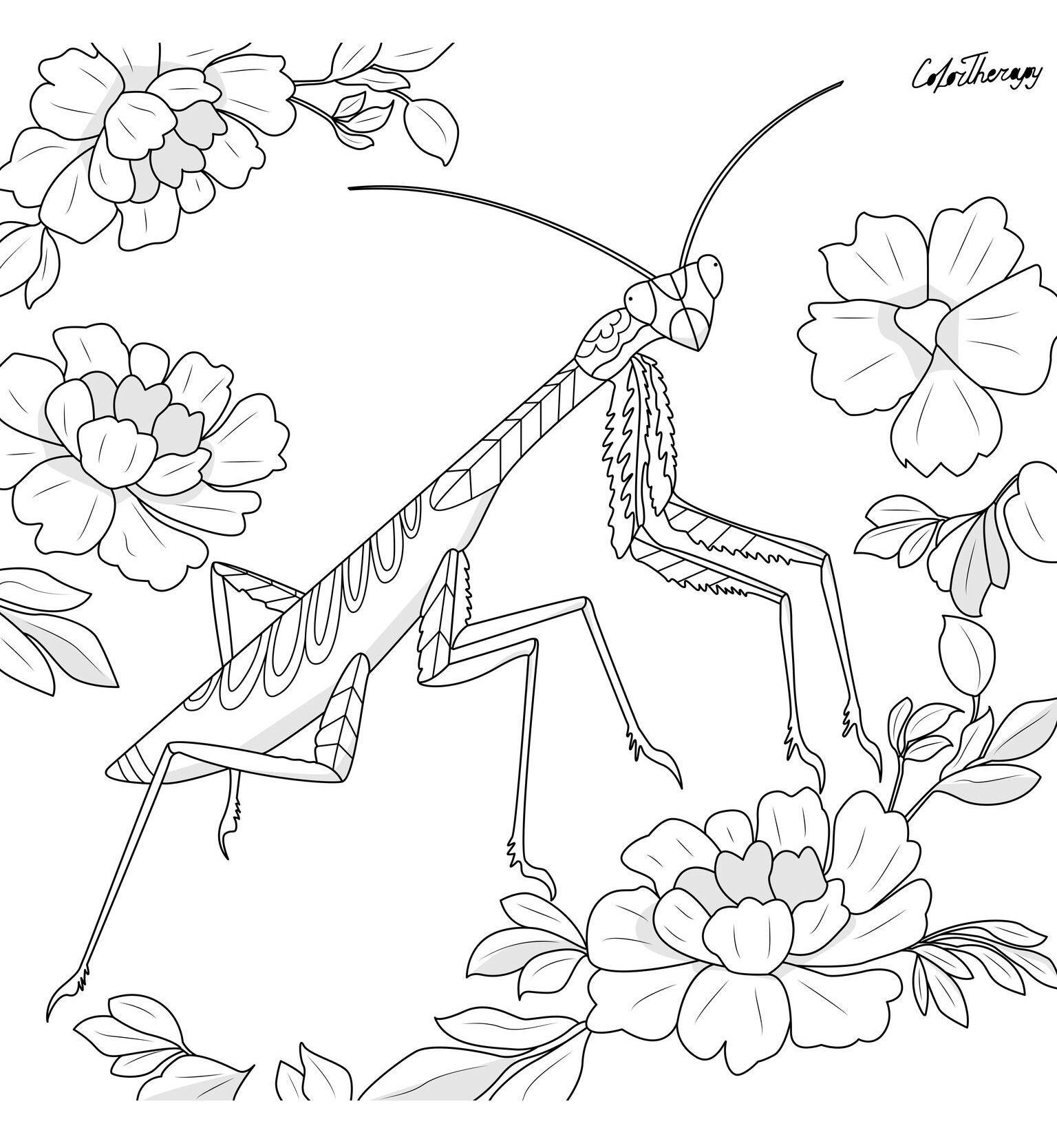 The Sneak Peek For The Next Gift Of The Day Tomorrow Do You Like This One Praying Mantis Coloring Pages Free Coloring Pages Animal Coloring Pages [ 1667 x 1536 Pixel ]