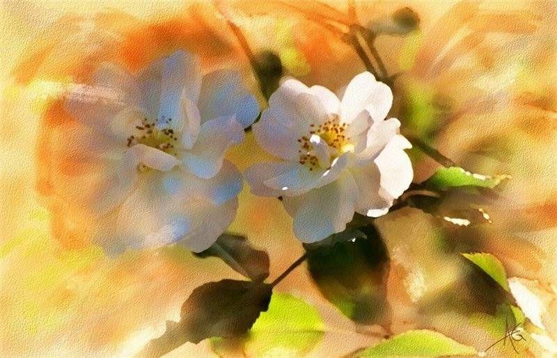 Watercolor art by Alberto Guillen