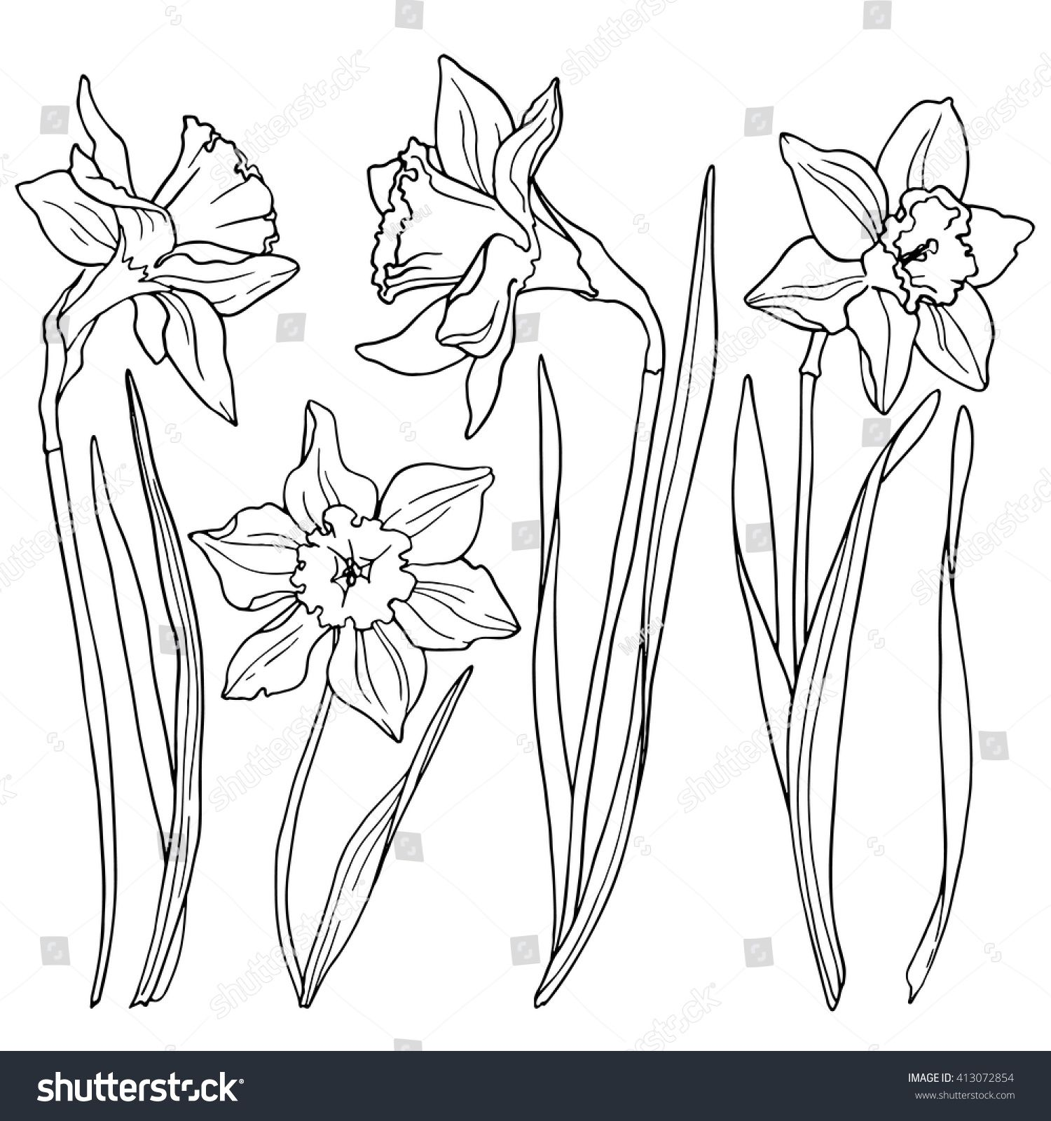 Daffodils Line Drawings Of Flowers Flower Drawing Flower Line Drawings Flower Sketches