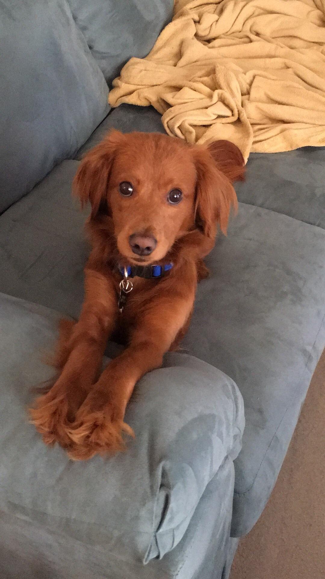 My best bud pretzel hes got the puppy dog eyes down ift