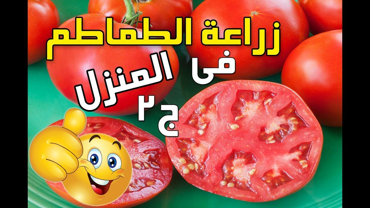 طريقة زراعة الطماطم فى المنزل من البذور الجزء ٢ خطوه خطوه من البذور و Vegetables Tomato Food