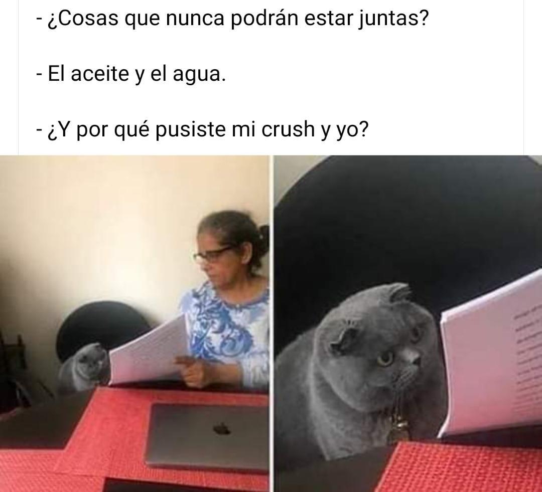 Los Mejores Memes Del Gato Gris Reganado Solo En Venezuela