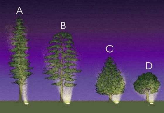 Low voltage uplighting of trees read more http www for Outdoor lighting uplight
